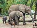 zoo-nyiregyhaza