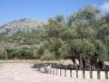 Najstarší olivovník, Foto: Jorge Campos