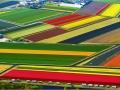 farma-tulipanov-holandsko