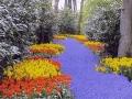 keukenhof-kvetinova-rieka