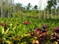 tropical-plantation_maui