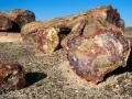 Namíbia - Skamenelý les