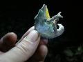 pygmy_chameleon_mount-mabu