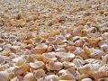 Ostrov Fadiouth, Foto: Julen