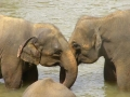 slony_srilanka