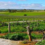 barossa-valley3