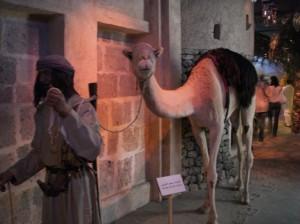 camel_museum