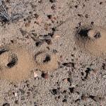 mravkolev