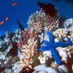 velka-koralova-bariera_2