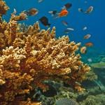 velka-koralova-bariera_3