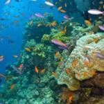 velka-koralova-bariera_5