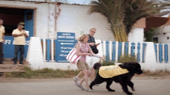 wifi-dogs