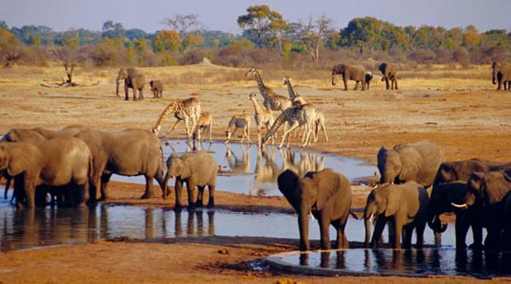 Národný park Etosha
